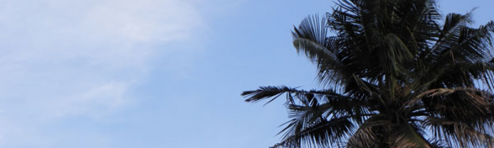 """A """"palm"""" skyline over my rooftop."""