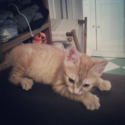 My cat Tsh <3