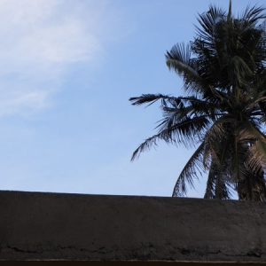"A ""palm"" skyline over my rooftop."