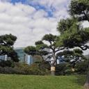 Landscape in Hama-rikyu Teien, Tokyo