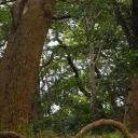 Forest, trees in Hama-rikyu