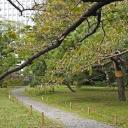 Some red leaves in Hama-rikyu Teien, Tokyo
