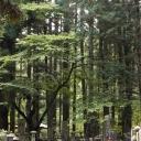 Okuoin Graveyard, Koyasan, Japan